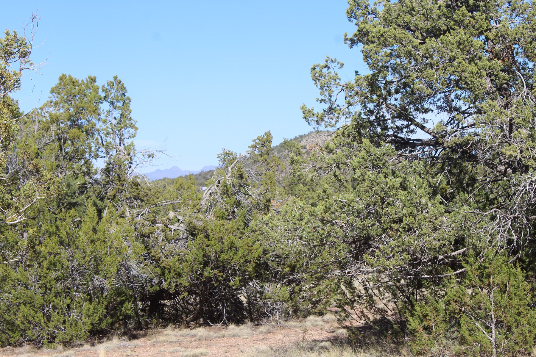 Mountain Land Close to I-40 Seligman AZ
