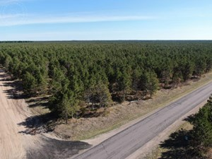 TOWN OF ROME 40 ACRE TIMBER CORNER LOT FOR SALE IN ADAMS COU