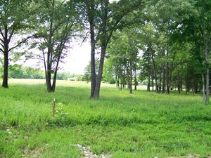 BEAUTIFUL TRACT OVERLOOKING PAINTED BLUFFS OF WHITE RIVER