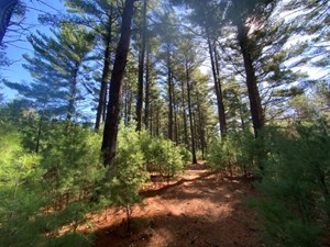 TOWN OF ROME 80 ACRE TIMBER LOT FOR SALE IN ADAMS COUNTY WI