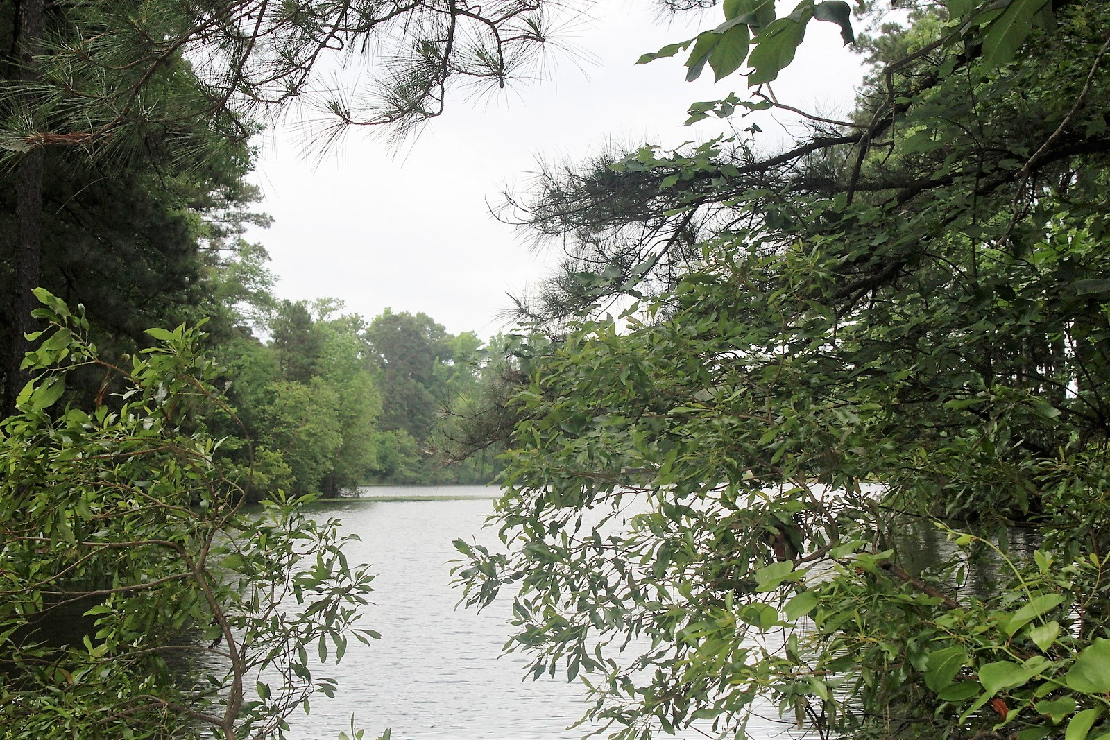 4-D WOODED LOT ALMOST 3 ACRES WINNSBORO WOOD COUNTY TEXAS