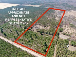 TOWN OF BIG FLATS 22.354 ACRE TIMBER LOT FOR SALE IN ADAMS