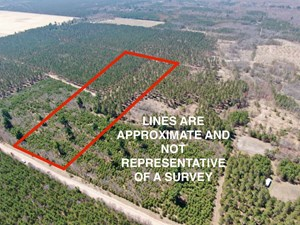 TOWN OF BIG FLATS 22.354 ACRE TIMBER LOT FOR SALE IN ADAMS C