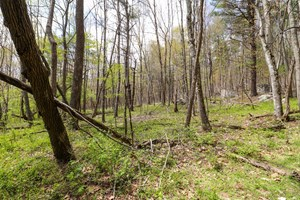 WOODED LAND FOR SALE IN RINER VA