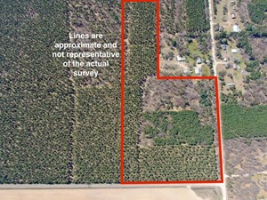 TOWN OF BIG FLATS 21.924 ACRE TIMBER LOT FOR SALE IN ADAMS C