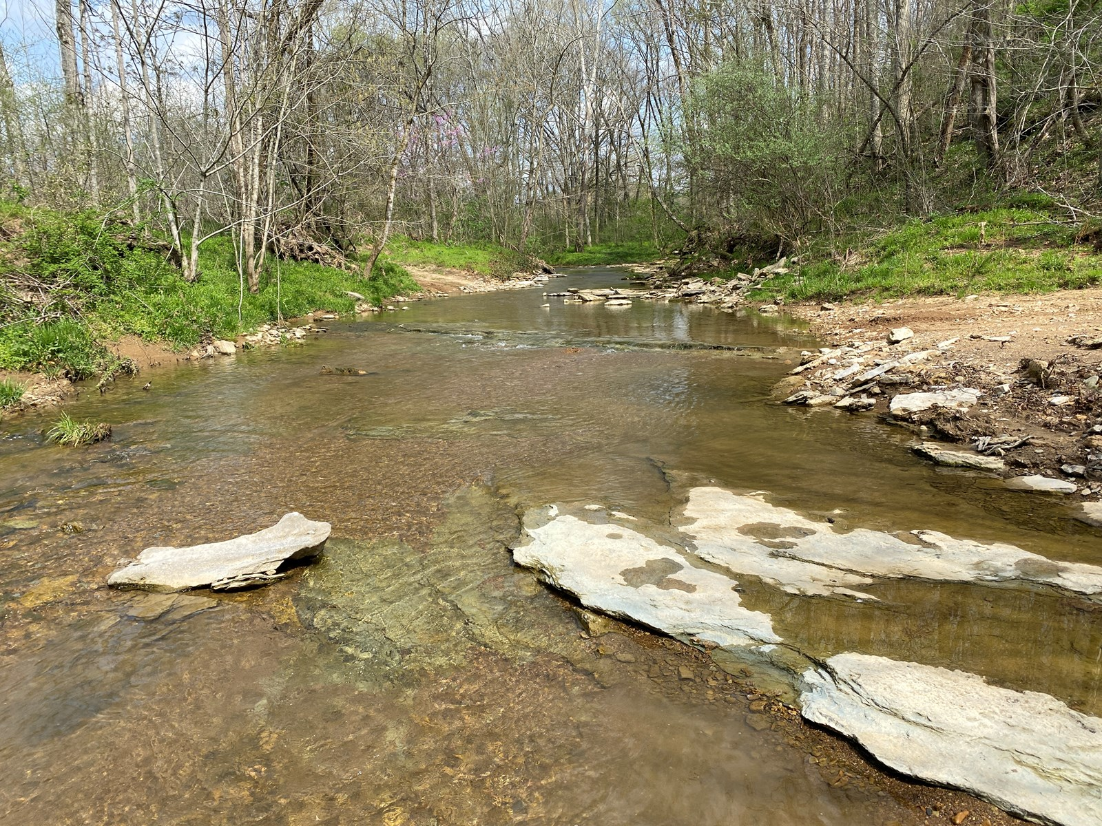 111.65 acres undeveloped land for sale near Summer Shade Ky.