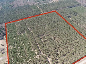 TOWN OF BIG FLATS 35 ACRE TIMBER LOT FOR SALE IN ADAMS COUNT