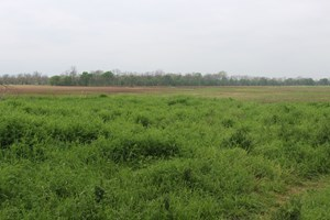 RECREATIONAL LAND FOR SALE IN IDABEL OKLAHOMA