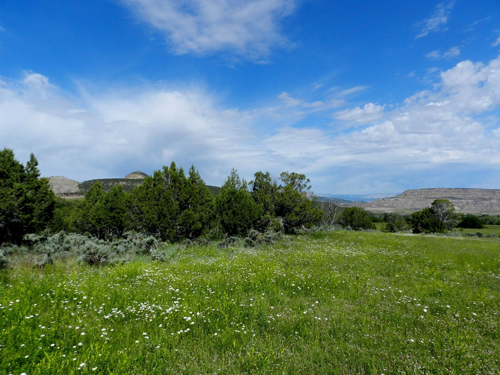 Irrigated Land with Creek and Springs For Sale Colorado