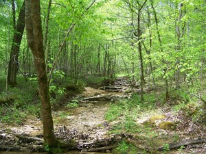 HUNTING LAND FOR SALE NEAR TENNESSEE RIVER