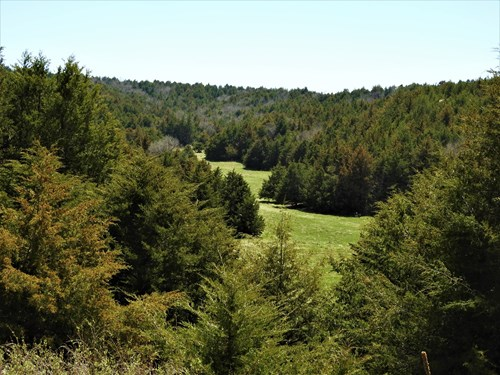 MAXWELL NEBRASKA TIMBERED HUNTING RANCH FOR SALE