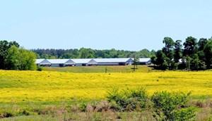 12 HOUSE POULTRY FARM FOR SALE CENTRAL MS