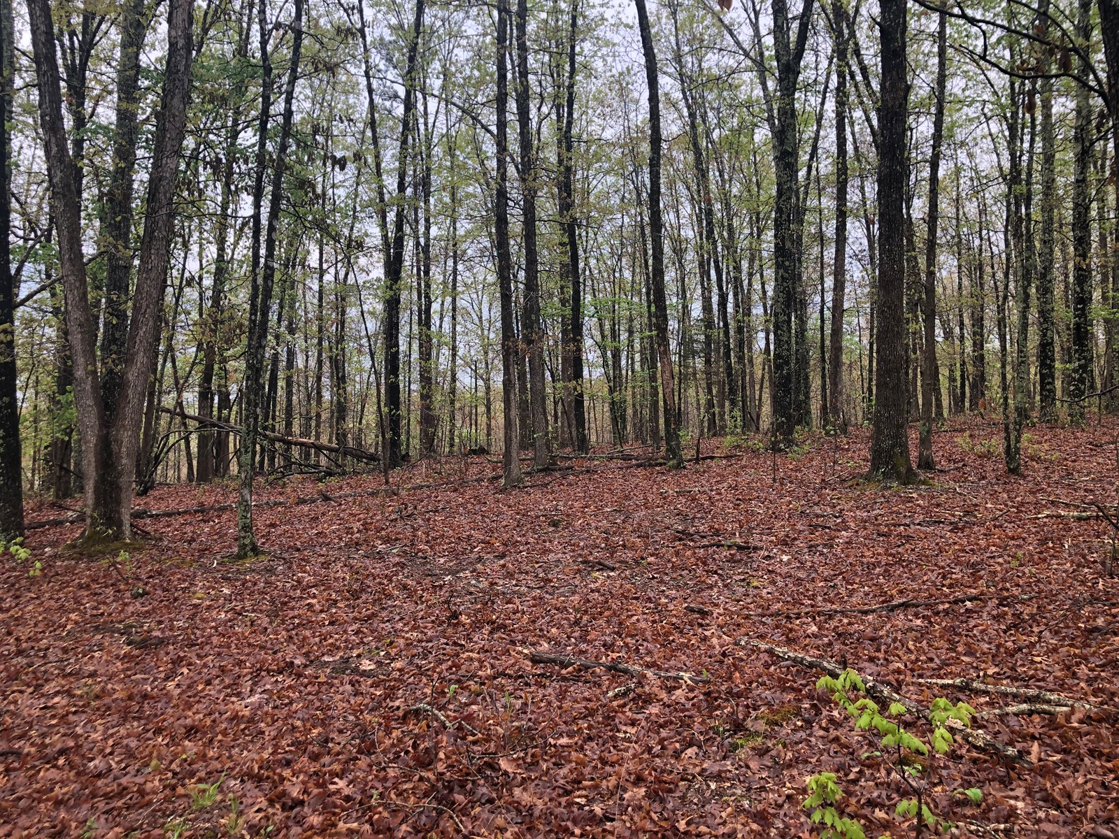 5 Acres on 19 S, perfect for a hunting cabin or camping!