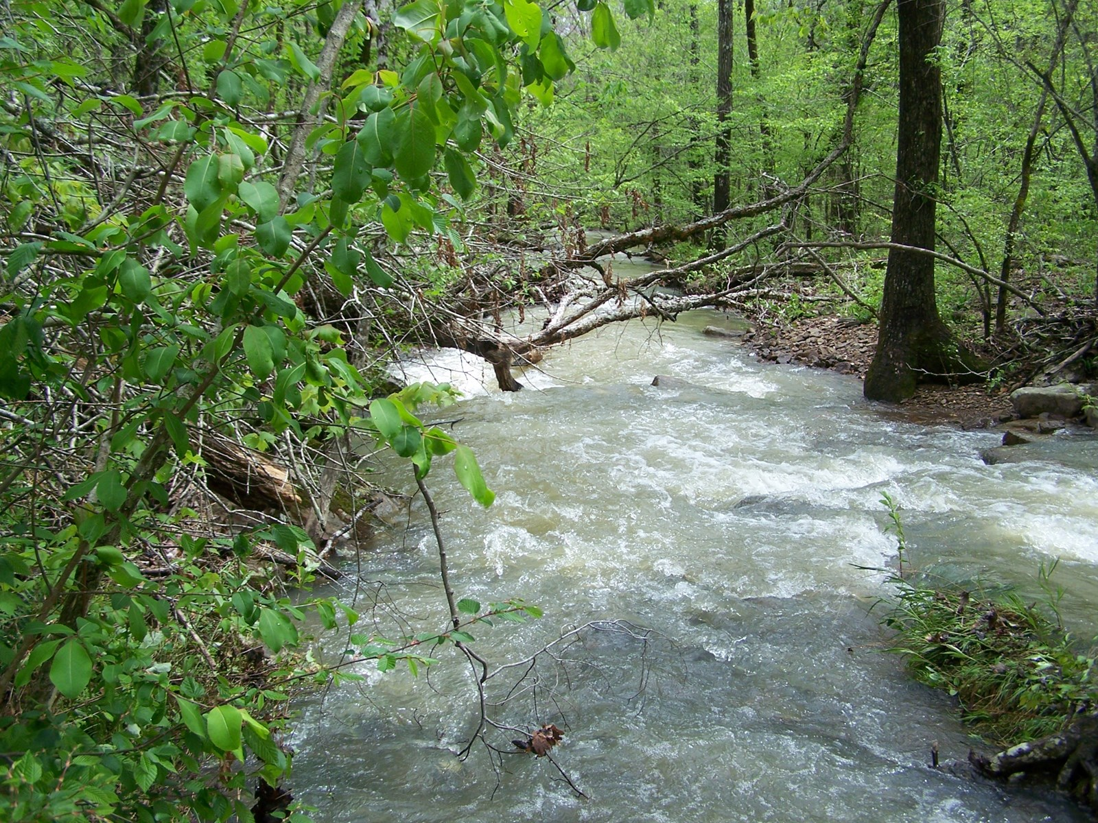 Arkansas Hunting/Timber/Recreational Land For Sale