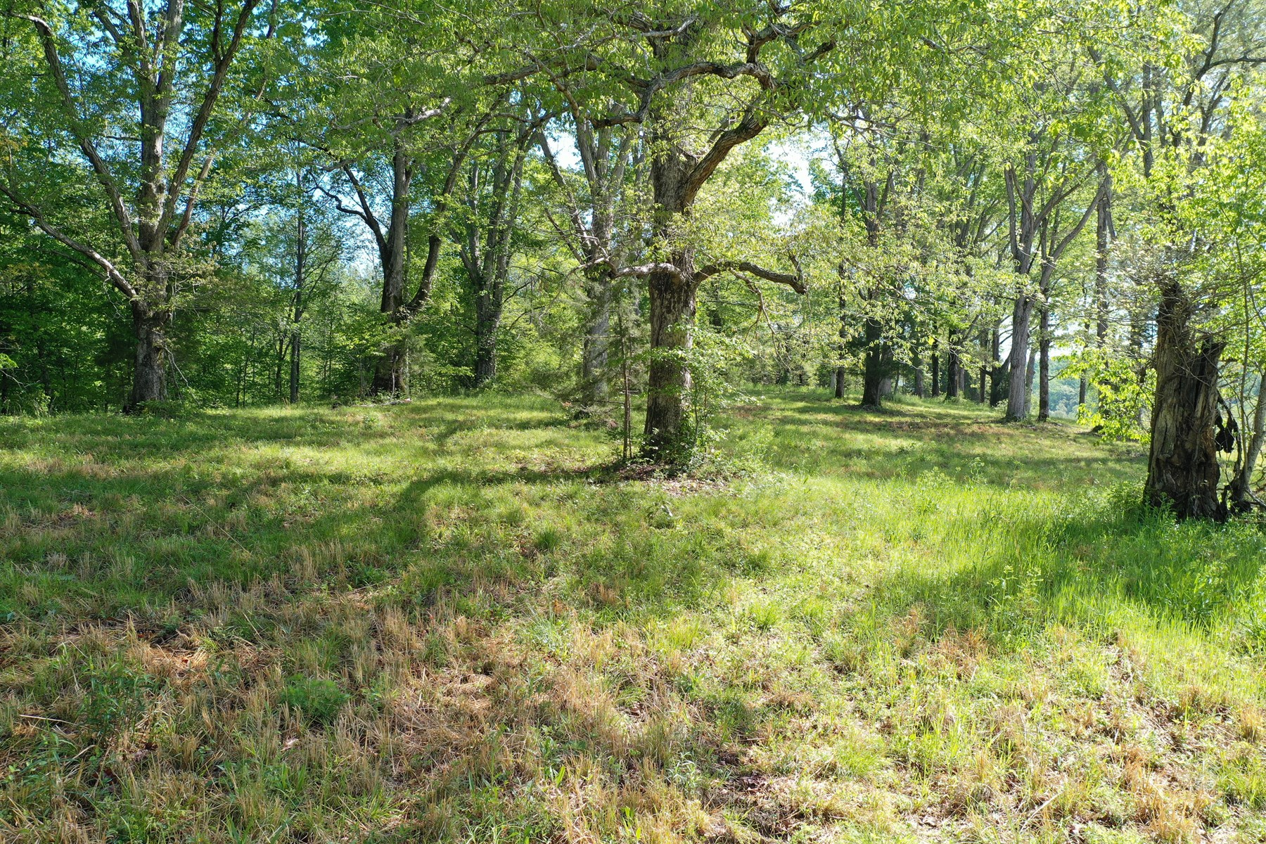 71.74 Acres vacant land for sale in Tn with Owner Terms!