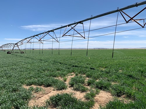 Farm For Sale Located in Central New Mexico, Torrance County