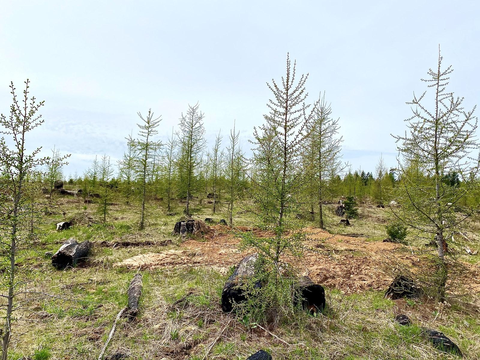 Wildwood Estates for sale Orofino, Idaho Parcel E 11+ acres