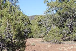 PENDING SALE: MOUNTAIN ACREAGE HEAVILY TREED NO HOA FOR SALE