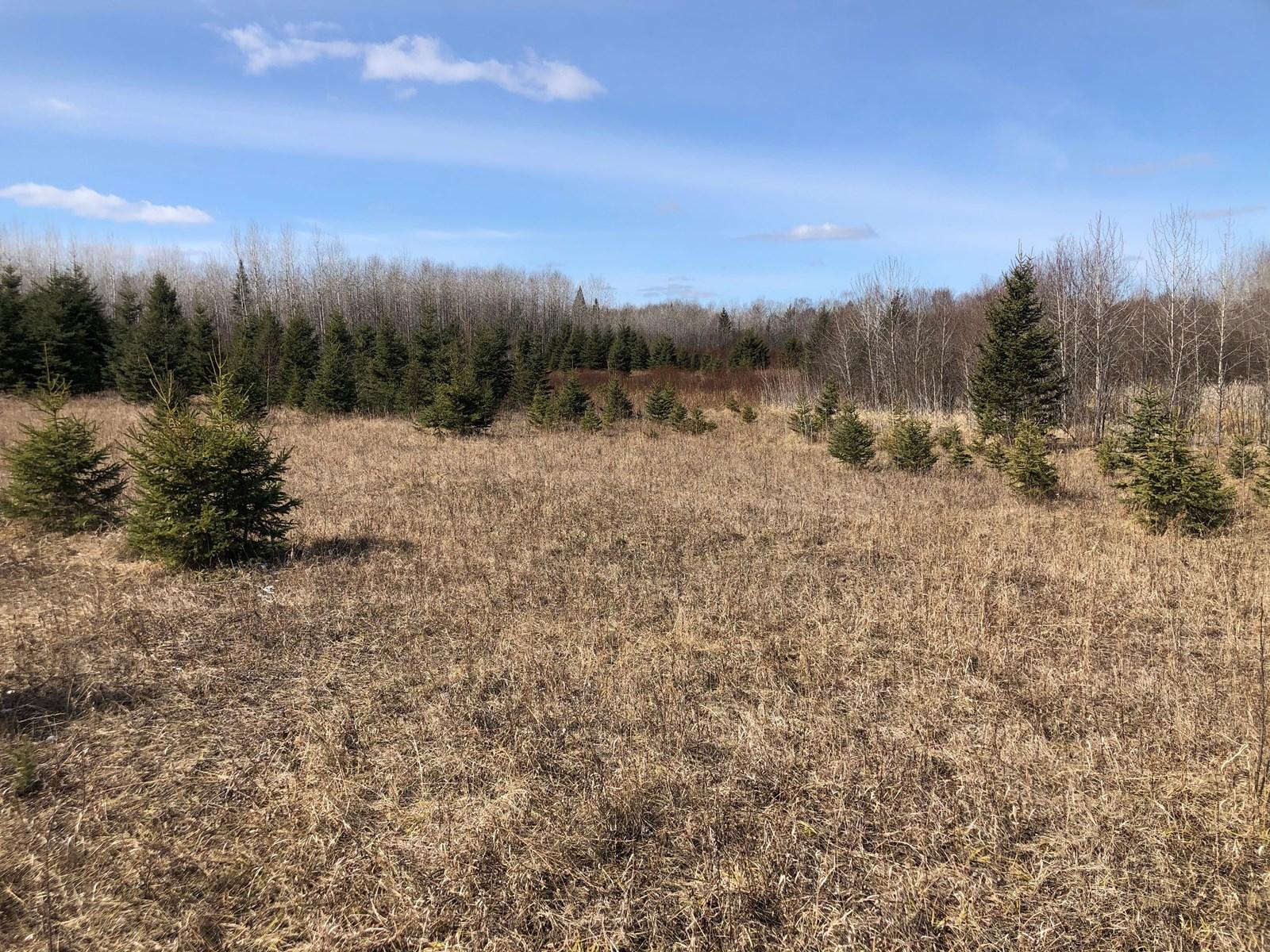 Land for sale in Littlefork, MN