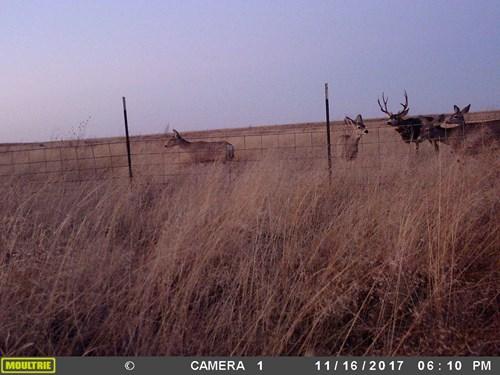 Western Mule Deer and Antelope Hunting Paradise in Texas