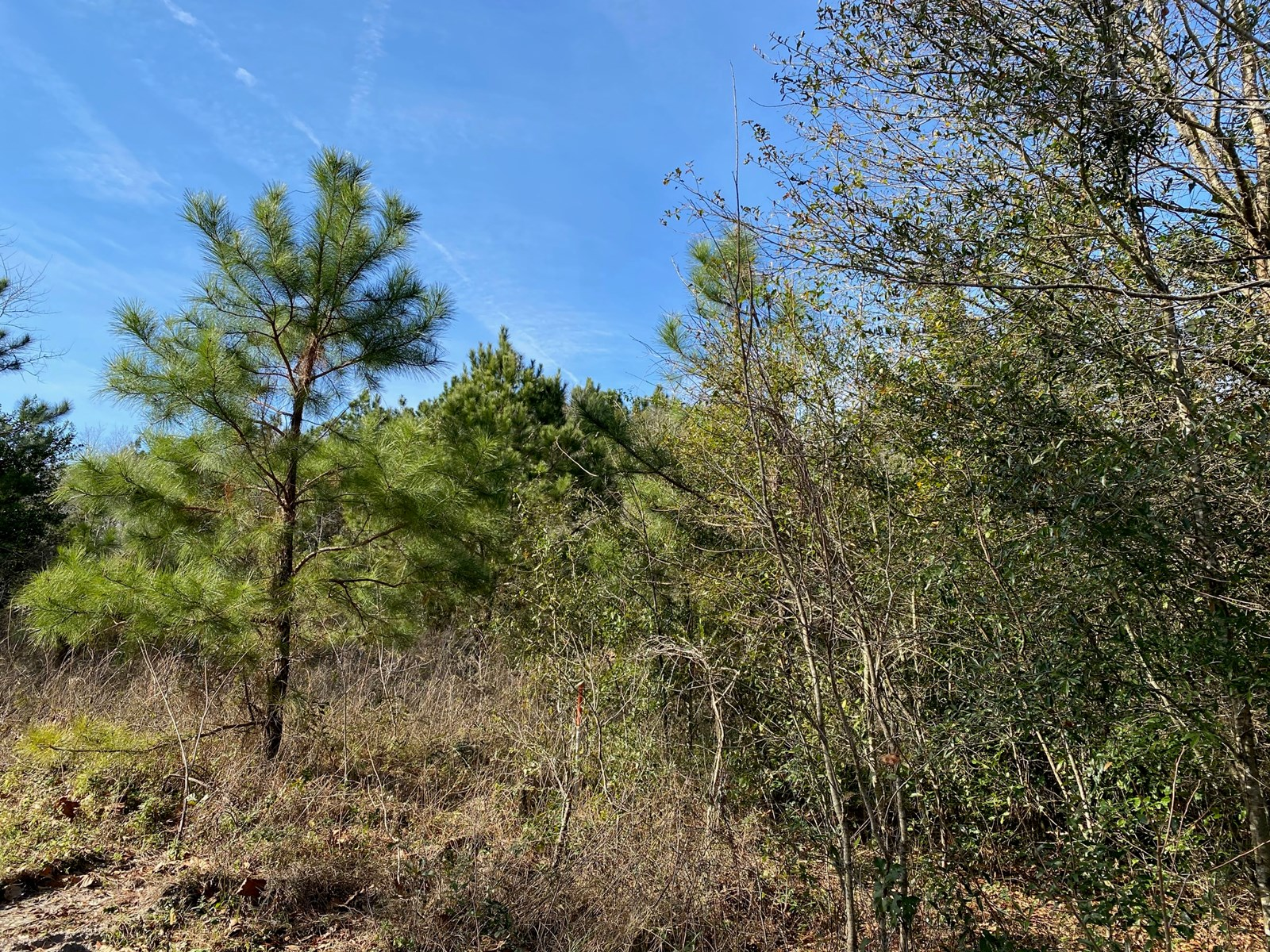 LOT 25 & 26 SUWANNEE BREEZE SUBDIVISION LIVE OAK FL