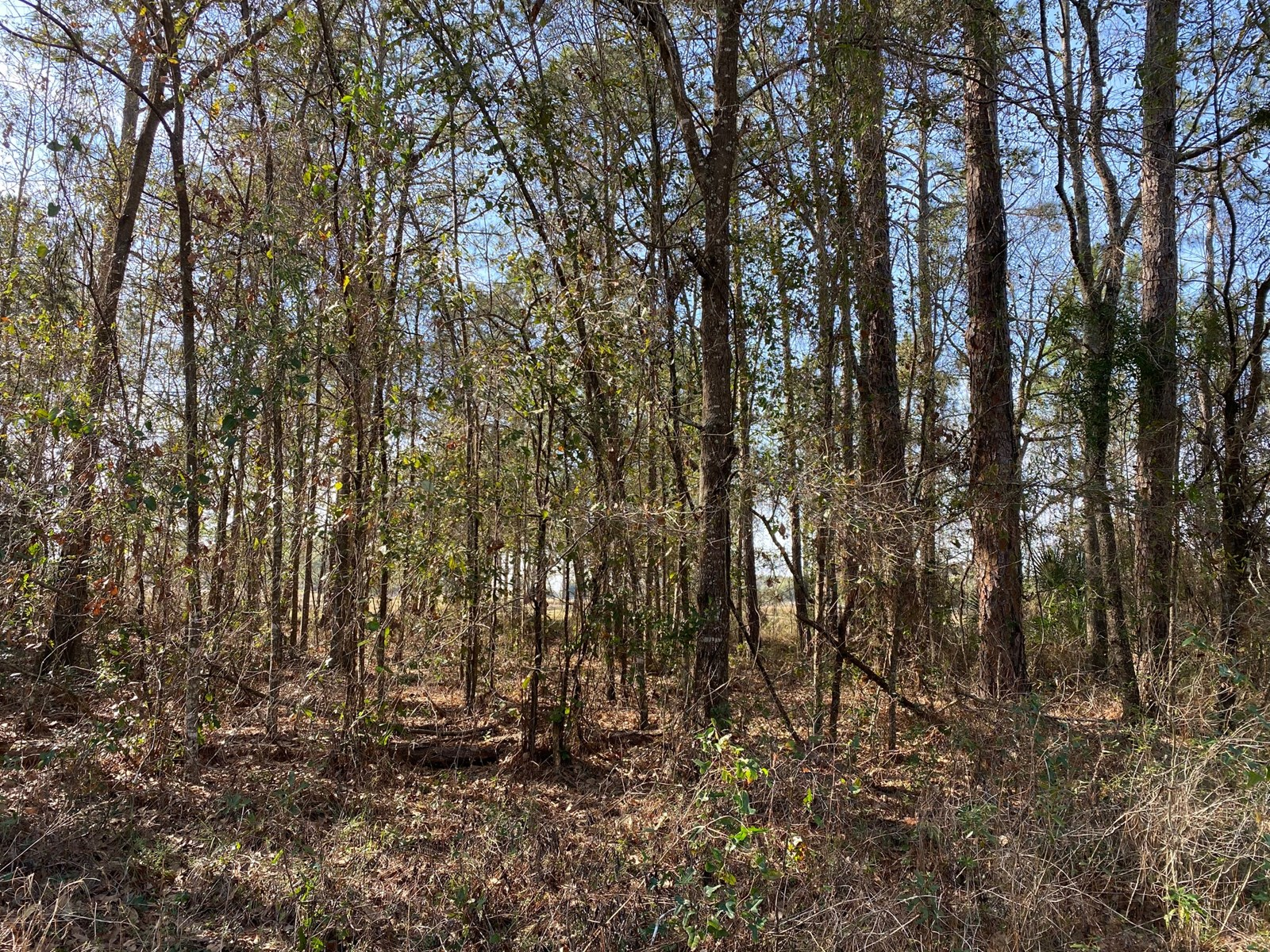 LOT 17 & 18 SUWANNEE BREEZE SUBDIVISION LIVE OAK FL