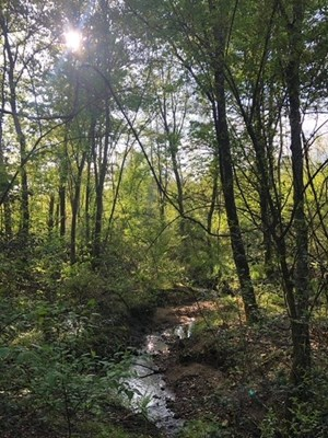 WOODED ACREAGE FOR SALE IN ALEXANDER COUNTY NORTH CAROLINA