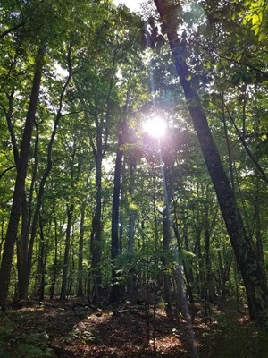 5 ACRES WITH NO RESTRICTIONS MINUTES TO KERR LAKE, VA