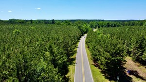 40 ACRE RESIDENTIAL / TIMBER / GRAND CANE, LA