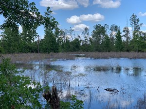 FARM WITH HUNTING LAND & HOME FOR SALE IN JACKSON COUNTY, FL