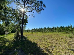 73+ ACRES IN GILCHRIST COUNTY