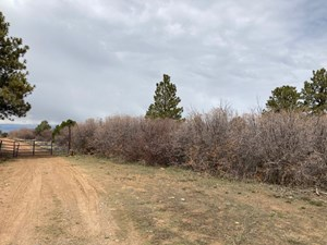 COME SEE THIS FABULOUS 40 ACRE PARCEL OURAY COUNTY COLORADO
