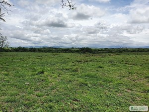 2.9 HECTARES LAND FOR SALE IN VIA INTERAMERICANA ANTON COCLE