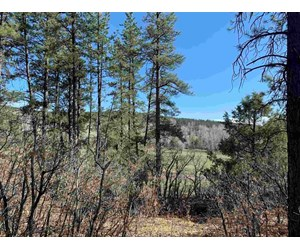 Mountain Land for Sale near Chama NM w/ Power and Views