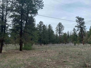 MOUNTAIN LAND FOR SALE BRAZOS,  CHAMA NM RECREATIONAL LAND
