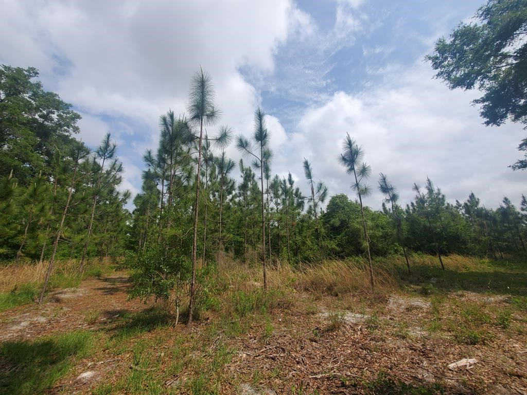 20 ACRES IN CHIEFLAND FLORIDA!