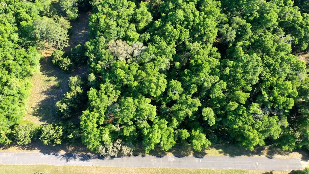 1 ACRE LOT IN SPANSIH TRACE SUBDIVISION!