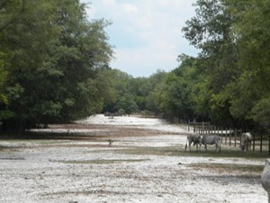 40 ACRES NW 100 AVENUE CHIEFLAND FL