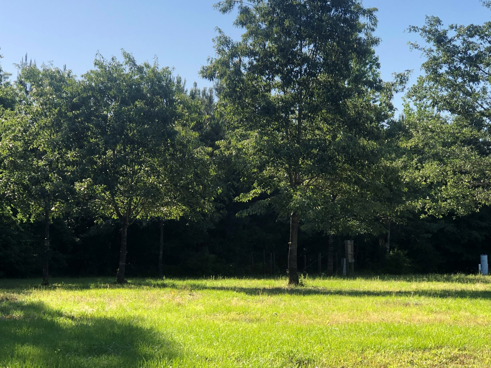 Secluded Land in the Country, Hunting and Recreational Tract