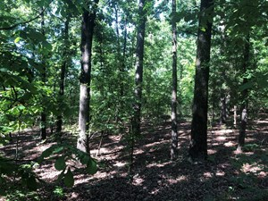 EAST TEXAS LAND FOR SALE HUNTING AND COUNTRY HOMESITE
