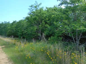 LAND FOR SALE IN TN – WOODED, STREAM, PRIVATE