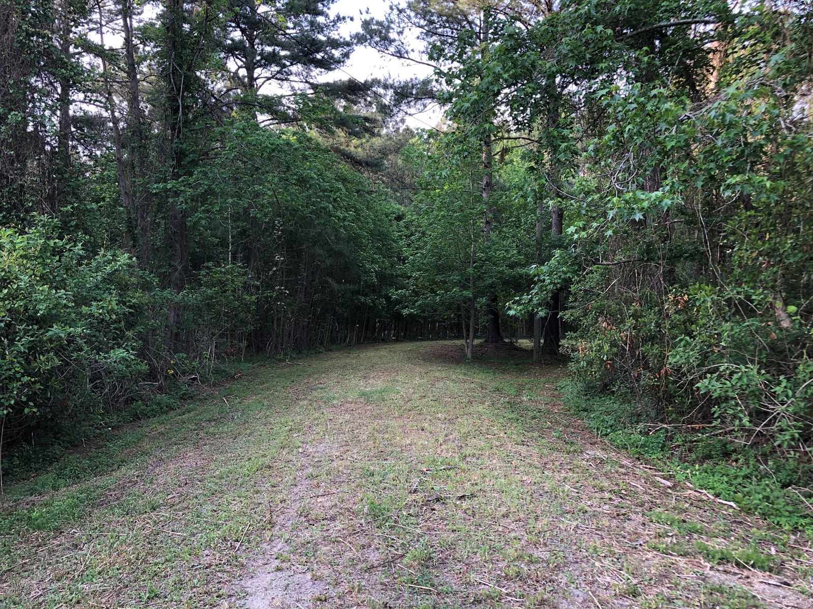 Great hunting tract in Hyde County, NC