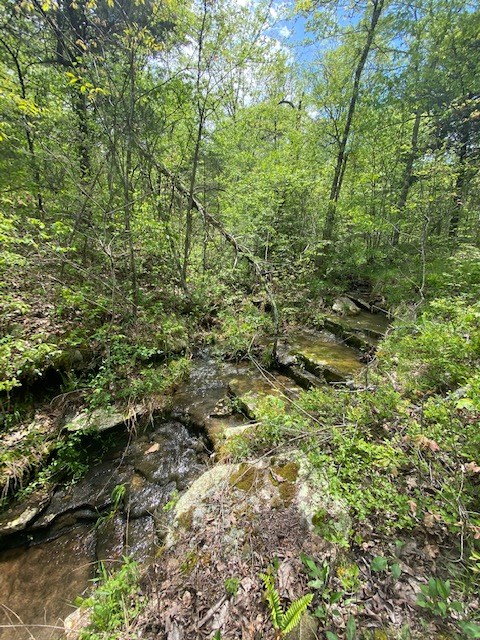 Vacant Land For Sale Bordering Ozark National Forest
