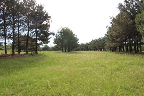 8.5 EAST TEXAS ACRES - WINNSBORO, WOOD COUNTY TX - LAND POND