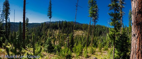 Build your dream house or cabin in remote Idaho- no CCR's