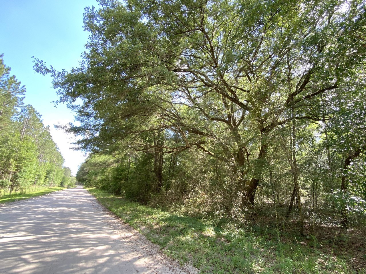 Beautiful 7 acre parcel in Columbia County Florida