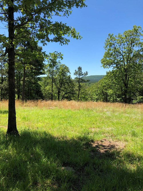 hilltop cabin for sale with national forest access