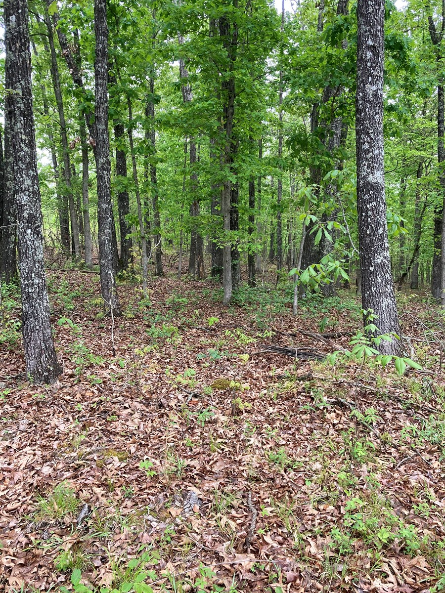 Land For Sale Near Willow Springs