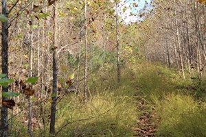 SOUTHERN MISSOURI LAND FOR SALE - RIVER ACCESSIBLE