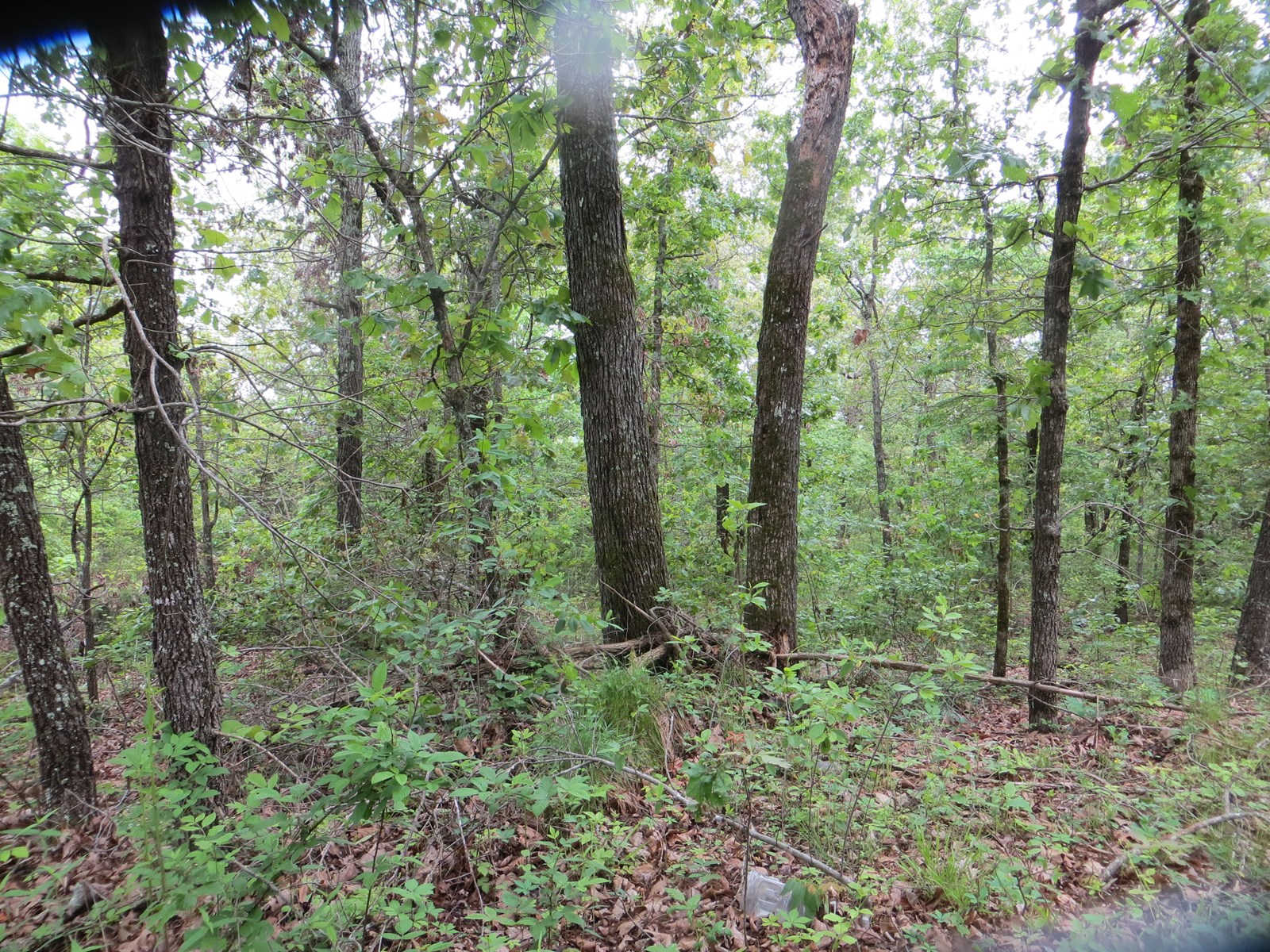 Land for Sale in Hardy, Arkansas